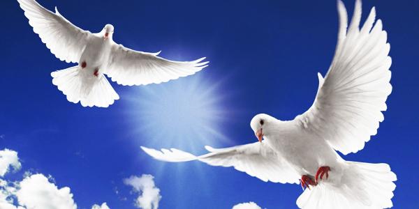memorial-doves